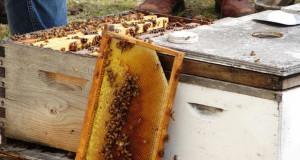 Panhandle Beekeeping Course